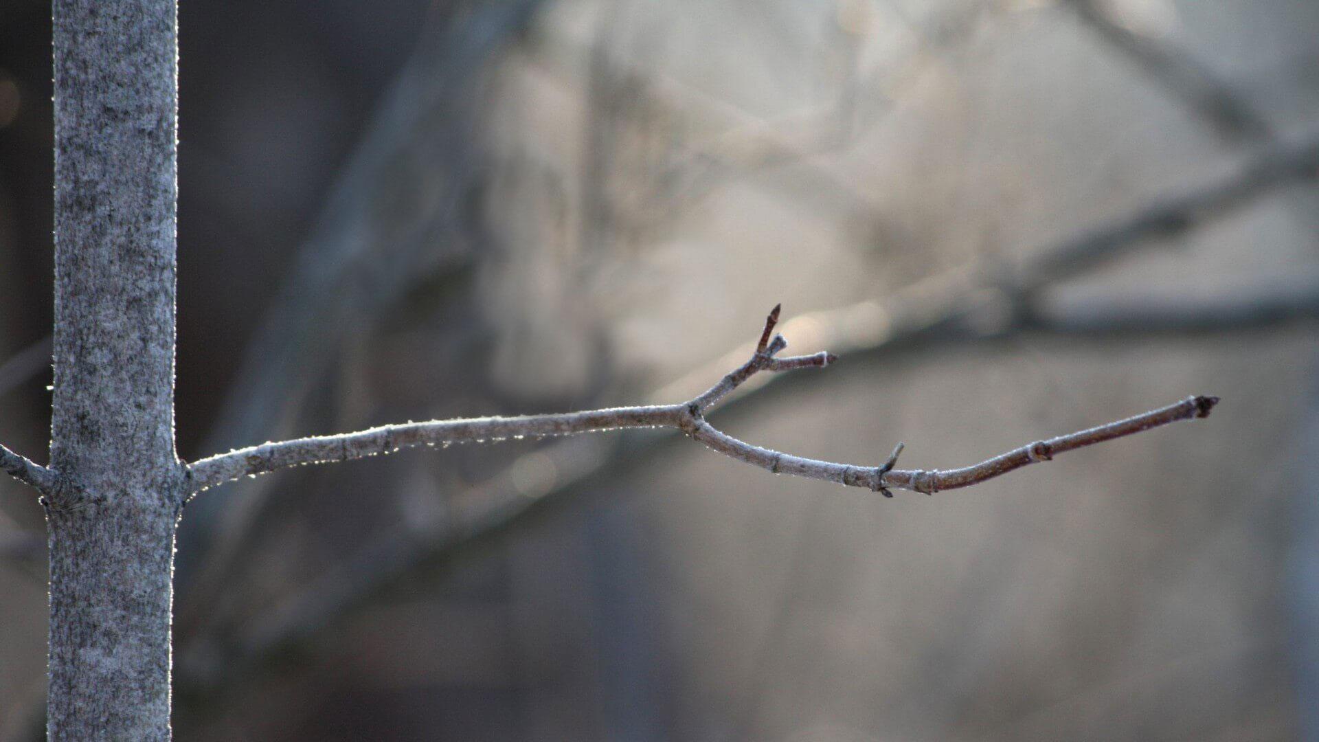 fondo albero